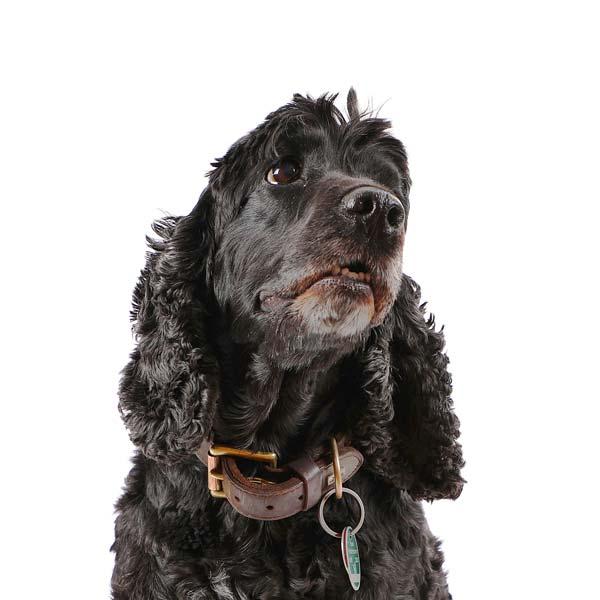 Barney • Bürohund
